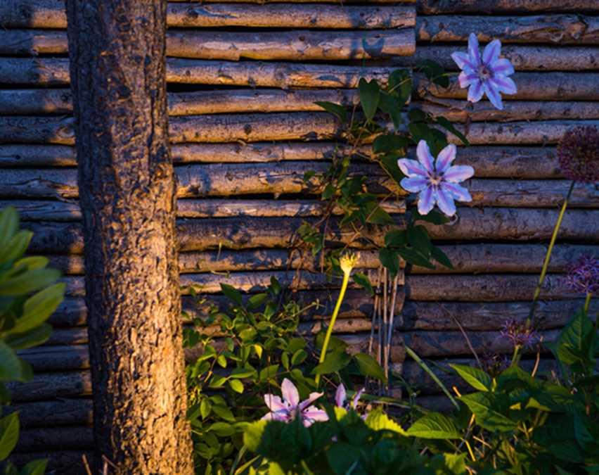 Havearkitektens leg med Østens stramme linjer